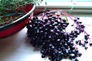 October's Formula Focus:  Elderberry Elixir