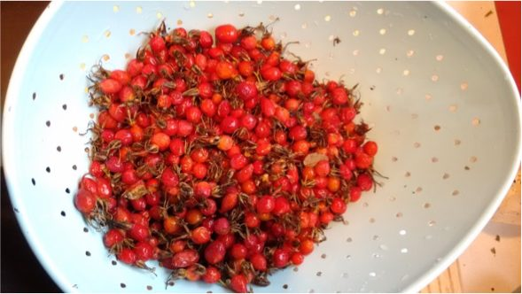 White colander containing washed rose hips